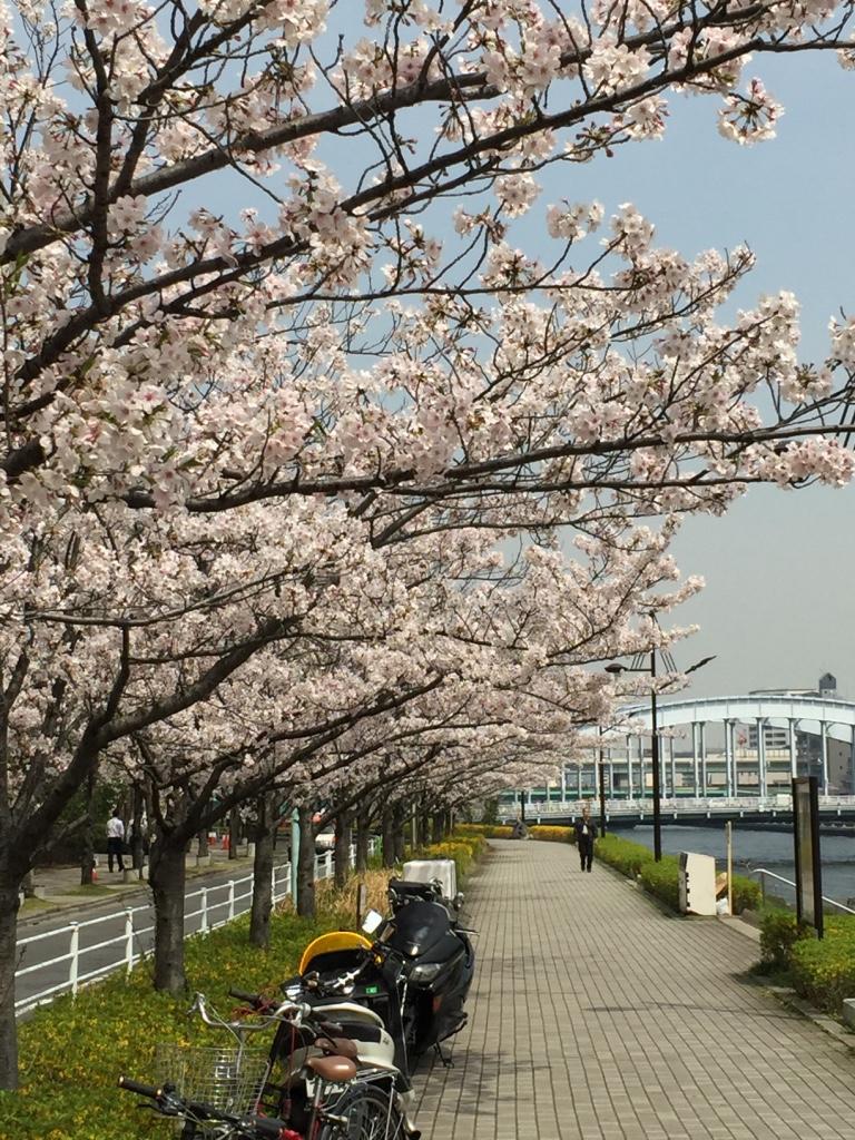 無料素材集 桜